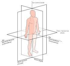 planos-anatomicos
